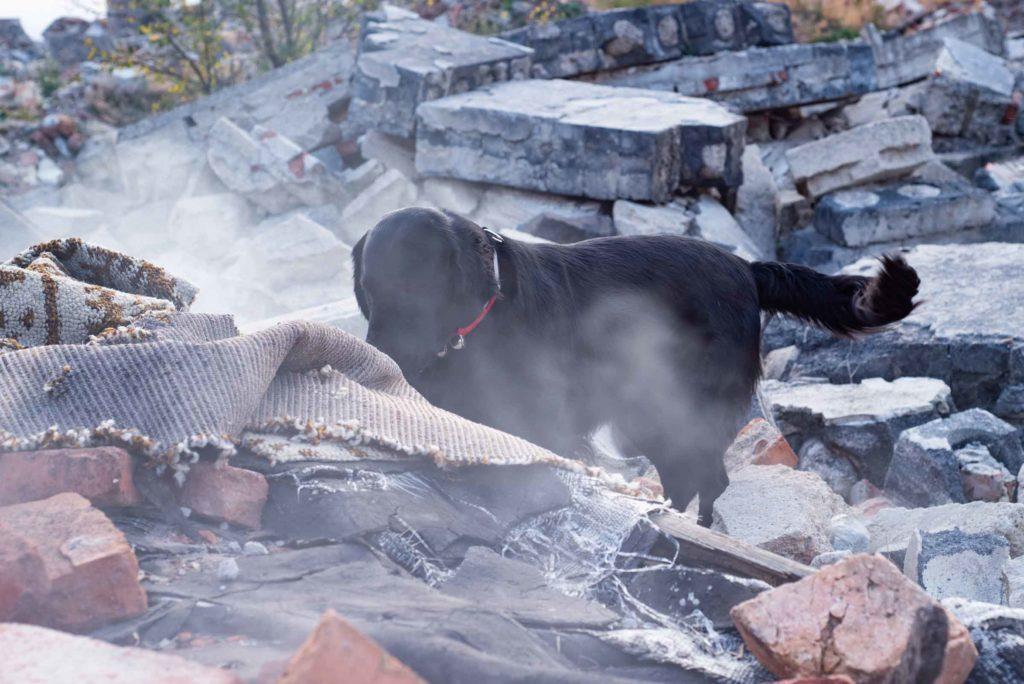 Dog climbing on broken stone after earthquake
